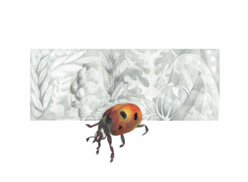 Beetle Coloured72DPI
