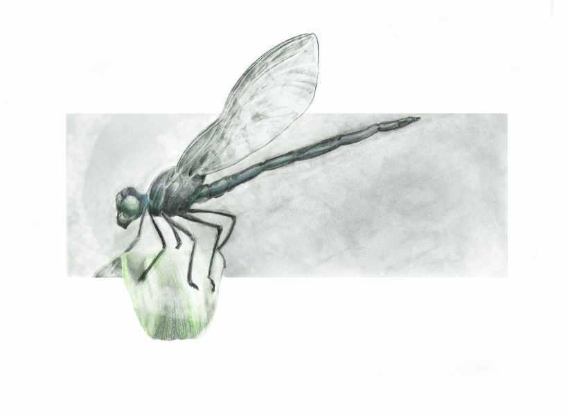 Dragonfly coloured 372DPI
