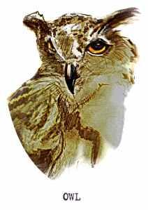 Owl FINAL72DPI
