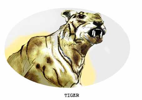 Tiger FINAL72DPI