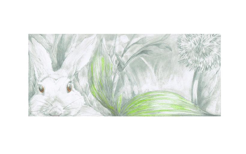 Rabbit for website 72dpi